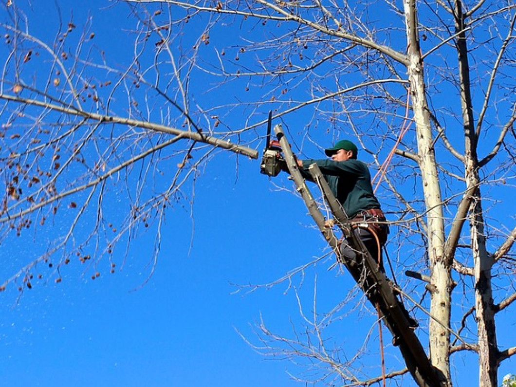 Need Tree Removal Service?